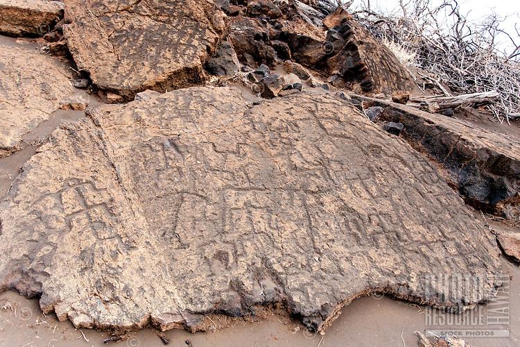 Multiple Hawaiian petroglyphs or ki'i pohaku at Puako Petroglyph Park, Big Island.