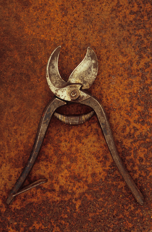 Pair of old well-used but maintained secateurs lying open on rusty metal sheet