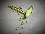 Crans Montana, le 28 f&eacute;vrier 2017, Pierre Crepaud et son &eacute;quipe nous proposent en entr&eacute;e un langoustine  crousti en cheveux d'anges, petits pois frais , sorbet framboise yaourt menthol&eacute;, sac a main fashion week, press&eacute;e de foie gras de canard la viande s&eacute;ch&eacute;e du Valais et abricots sec, dessert de saison mode printemps &eacute;t&eacute; 2017<br /> &copy; sedrik nemeth