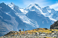 Trail runners in the landscape looking at the Dom, while on the Via Valais, a multi-day trail running tour connecting Verbier with Zermatt, Switzerland.