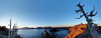 Whitebark pine tree standing over Crater Lake at dawn, Crater Lake National Park, Oregon, USA, North America