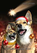 CHIARA,CHRISTMAS ANIMALS, WEIHNACHTEN TIERE, NAVIDAD ANIMALES, paintings+++++,USLGCHI495,#XA# ,funny ,funny