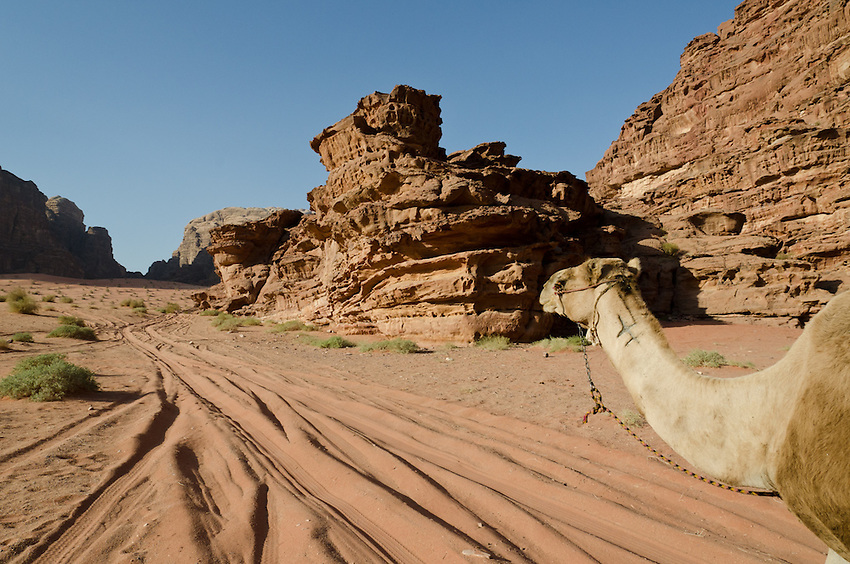 The camel of a Bedouin guide heads up a valley in Wadi Rum, Jordan.