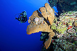 Diver, reef scene, Little Cayman