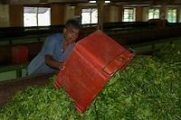 Near Kandy Tea factory and on the road to Colombo, Sri Lanka