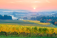 Five Mountains Vineyard with fall color and sunrise. Oregon