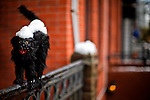 United States, New Jersey. A Halloween decoration is seen covered with snow after the pass of the nor'easter winter storm in Jersey City, New Jersey. 08/11/2012. Photo by Eduardo Munoz Alvarez / VIEWpress.