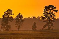 Sun setting on farmland. Bruce Peninsula.<br />Ferndale<br />Ontario<br />Canada