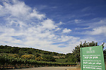 Israel, Upper Galilee, Ein Yakim picnic area by road 866