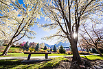 _RE_7155<br /> <br /> 1704-06 GCS Spring<br /> <br /> April 5, 2017<br /> <br /> Photography by Nate Edwards/BYU<br /> <br /> © BYU PHOTO 2016<br /> All Rights Reserved<br /> photo@byu.edu  (801)422-7322