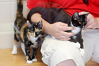 NWA Democrat-Gazette/DAVID GOTTSCHALK  Brandon Dow, of Fayetteville, visits with cats Friday, September 11, 2015 in the free roam cat room before making an adoption at the Lester C. Howick Animal Shelter of Washington County in Fayetteville. Animal shelters in the area are holding an Empty our Shelters event offering adoptions for $10.00. The event continues today at participating shelters that include Fayetteville, Springdale, Rogers, Siloam Springs, Bella Vista, Lowell and the Humane Society for Animals in Rogers.