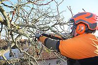 Uwe Schaffner schneidet die Alte Kastanie an der Groß-Gerauer Straße zurück