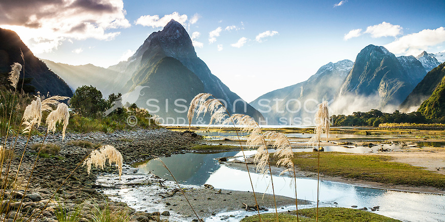 Late afternoon Milford Sound with sunlit mist rising from Bowen Falls in the distance and toitoi in the foreground, Fiordland National Park, South Island, New Zealand - stock photo, canvas, fine art print