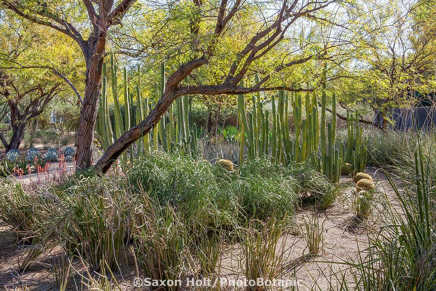 Sunnylands garden, Southern California