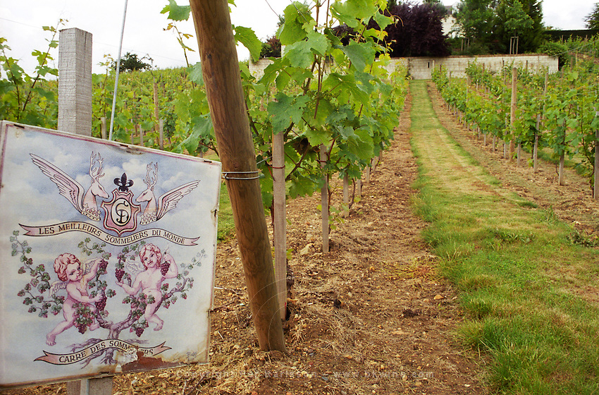A part of the vineyard that has been planted recently by the prize winning sommeliers in the Clos de l'Echo vineyard of Couly Dutheil in Chinon, INDRE ET LOIRE FRANCE