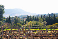 View from Domaine de la Tour du Bon the Mediterranean sea can be seen in a haze in the distance View over the vineyard in spring towards the Ste Baume mountains View over the vineyard in spring, vines in Cordon Royat training. Mourvedre Domaine de la Tour du Bon Le Castellet Bandol Var Cote d'Azur France