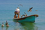 A  standing fisherman in a boat is surrounded by  the sea birds of pelicans and seagulls in  hope for a free meal.