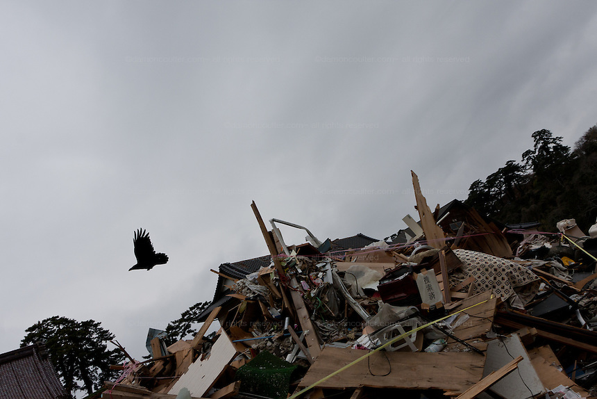 A crow flies over ruined buildings and debris in the city of Ishinomaki, Miyagi prefecture, Japan Friday May 6th 2011. Ishinomaki bore the brunt of the magnitude 9 earthquake that struck the Tohoku coast on March 11th and the town was almost completely destroyed by the large tsunami that followed the quake 20 minutes later