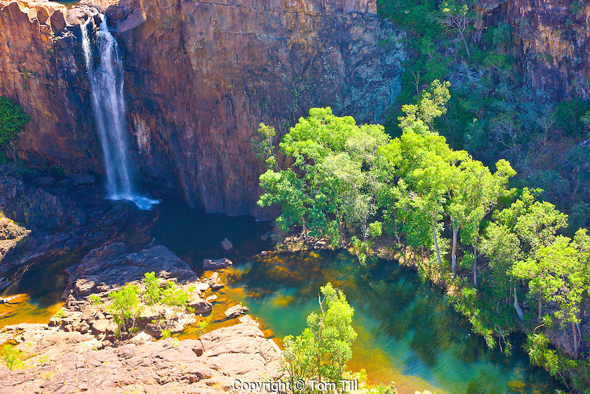 Waterfall     Nitmiluk National Park, Australia    Falls from Arhemland Escarpment       Northern Territory   Eucalyptus (gum) trees