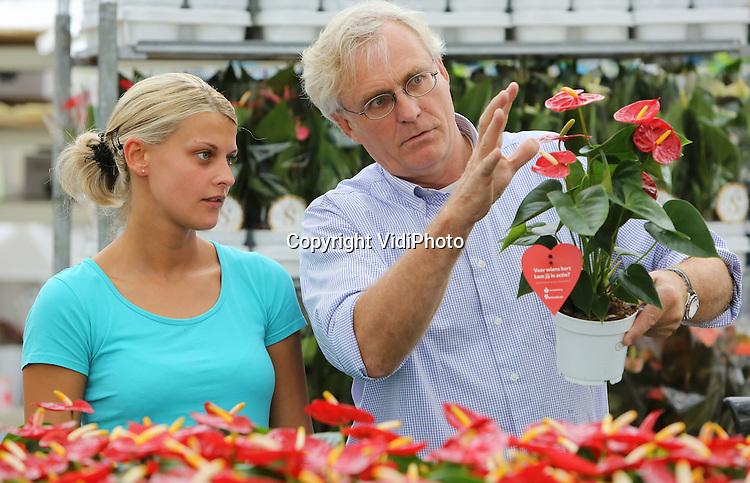 Foto: VidiPhoto<br /> <br /> BERGSCHENHOEK (ZH) &ndash; Anthuriumkwekers aan de slag voor Hartstichting. Bij anthuriumkweker Stolk Brothers wordt donderdag koortsachtig gewerkt aan de selectie en verwerking van tienduizenden potanthuriums voor de Hartstichting. Vanaf maandag worden de hartvormige planten verkocht aan het publiek, waarbij een deel van de opbrengst ten goede komt aan onderzoek naar hart- en vaatziekten; wereldwijd doodsoorzaak nummer &eacute;&eacute;n bij vrouwen. De kwekers zijn de actie gestart omdat de aanwezigheid kamerplanten volgens wetenschappelijk onderzoek bijdraagt aan sneller herstel na een ziekte. Volgens de Hartstichting vormt het initiatief van de Nederlandse anthuriumkwekers tevens een goede aanzet voor de aanstaande Nationale Hartweek van 20-27 september. Foto: Pieter (r) en Henri Stolk (l) selecteren de mooiste anthuriums voor de Hartstichting.