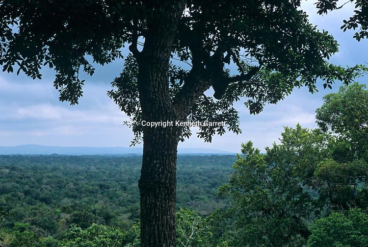 View from Main Pyramid, Homul Center, looking North across the jungle, Holmul; Guatemala; Maya; Francisco Estradabelli
