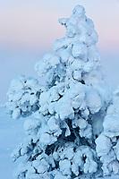 Europe/Finlande/Laponie/Levi: au sommet de la montagne de Levi