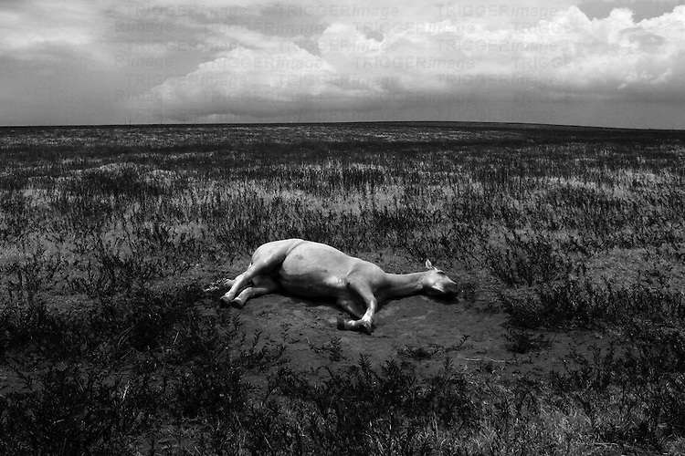A horse lying on the ground in a barren landscape