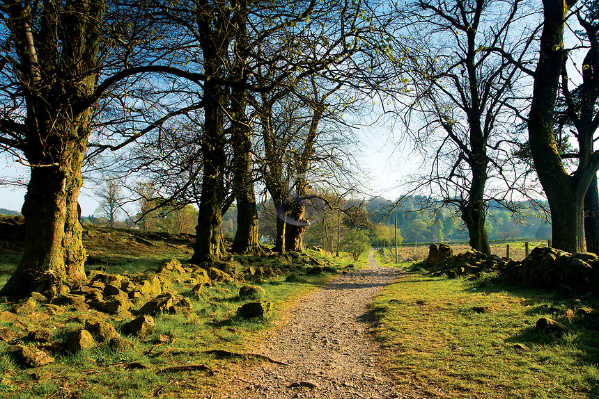The West Highland Way, near Easter Carbeth, Blanefield, Stirlingshire