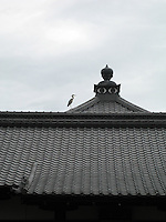 Crane on a temple roof