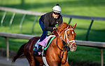 LOUISVILLE, KENTUCKY - APRIL 27: Out for a Spin, trained by Dallas Stewart, exercises in preparation for the Kentucky Oaks at Churchill Downs in Louisville, Kentucky on April 27, 2019. John Voorhees/Eclipse Sportswire/CSM