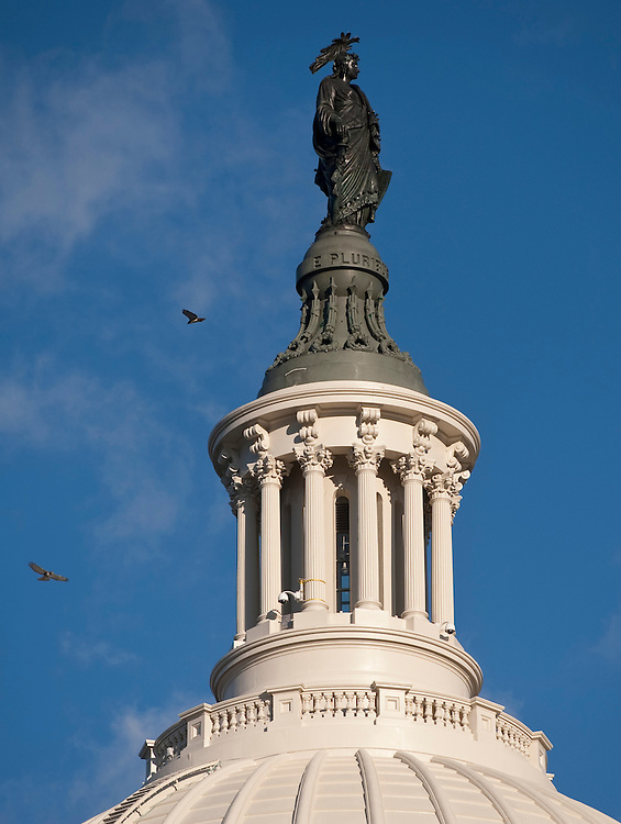 UNITED STATES - NOVEMBER 17: Hawks ride thermals around the Statue of Freedom over the U.S. Capitol on Wednesday, Nov. 17, 2010. (Photo By Bill Clark/Roll Call)