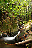 BELIZE, Hopkins, a waterfall and swimming pool at the end of the Ben's Bluff Trail, Cockscomb Basin Wildlife Sanctuary