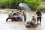 Group RWashing Elephants