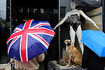 GREAT BRITAIN, London, dog in shop window in Lower Marsh / GROSSBRITANNIEN, London, Hund im Schaufenster