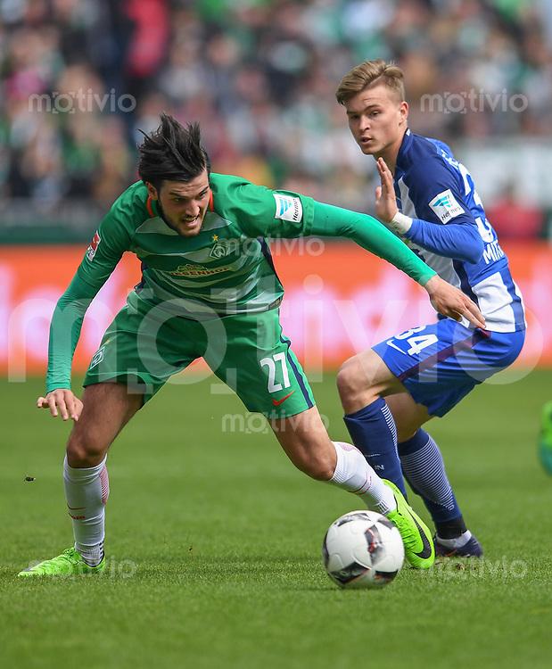 FUSSBALL     1. BUNDESLIGA      31. SPIELTAG    SAISON 2016/2017  SV Werder Bremen - Hertha BSC Berlin                          29.04.2017 Florian Grillitsch (li, SV Werder Bremen) gegen Maximilian Mittelstaedt (re, Hertha BSC Berlin)