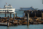 CA sea lions at Pier 39