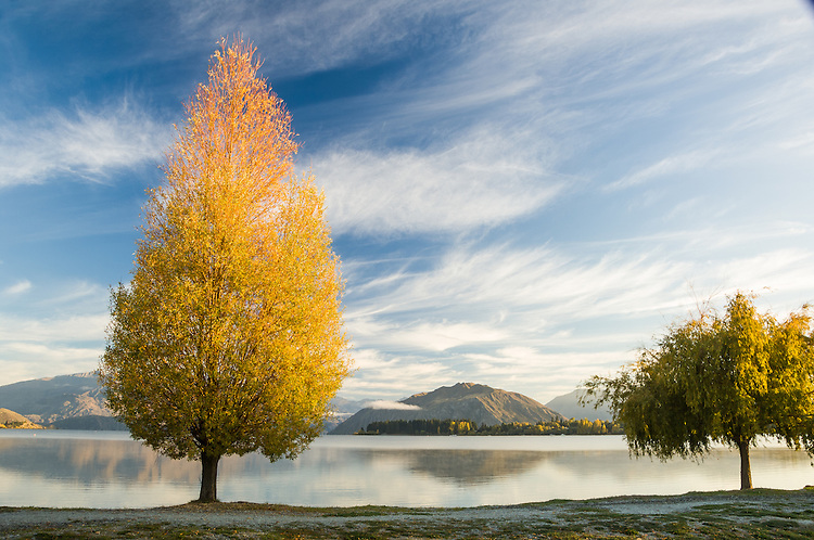 Autumn trees, lakefront, Lake Wanaka, New Zealand - stock photo, canvas, fine art print