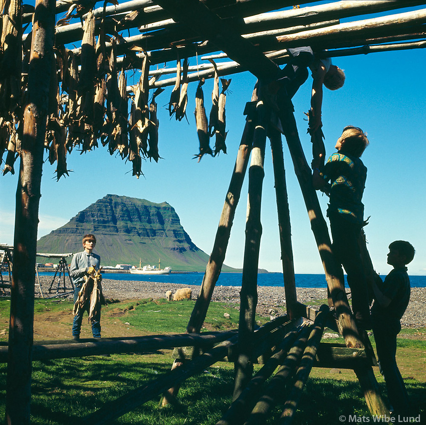 Krakkar vinna vi&eth; har&eth;fisktr&ouml;nur &aacute; Grundarfir&eth;i, 1970<br /> <br /> Children at work on fish-drying racks, Grundarfj&ouml;r&eth;ur, 1970