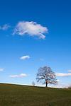 Europa, DEU, Deutschland, Nordrhein Westfalen, NRW, Oberbergisches Land, Nuembrecht, Typische Landschaft, Einzelner Baum, Eiche, Eichenbaum, Himmel, Wolken, Cumuluswolken, Kategorien und Themen, Natur, Umwelt, Landschaft, Jahreszeiten, Stimmungen, Landschaftsfotografie, Landschaften, Landschaftsphoto, Landschaftsphotographie, Wetter, Himmel, Wolken, Wolkenkunde, Wetterbeobachtung, Wetterelemente, Wetterlage, Wetterkunde, Witterung, Witterungsbedingungen, Wettererscheinungen, Meteorologie, Bauernregeln, Wettervorhersage, Wolkenfotografie, Wetterphaenomene, Wolkenklassifikation, Wolkenbilder, Wolkenfoto<br /> <br /> [Fuer die Nutzung gelten die jeweils gueltigen Allgemeinen Liefer-und Geschaeftsbedingungen. Nutzung nur gegen Verwendungsmeldung und Nachweis. Download der AGB unter http://www.image-box.com oder werden auf Anfrage zugesendet. Freigabe ist vorher erforderlich. Jede Nutzung des Fotos ist honorarpflichtig gemaess derzeit gueltiger MFM Liste - Kontakt, Uwe Schmid-Fotografie, Duisburg, Tel. (+49).2065.677997, archiv@image-box.com, www.image-box.com]