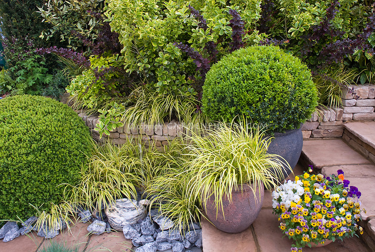 Container plants perennials shrubs flowers grasses for Large garden grasses