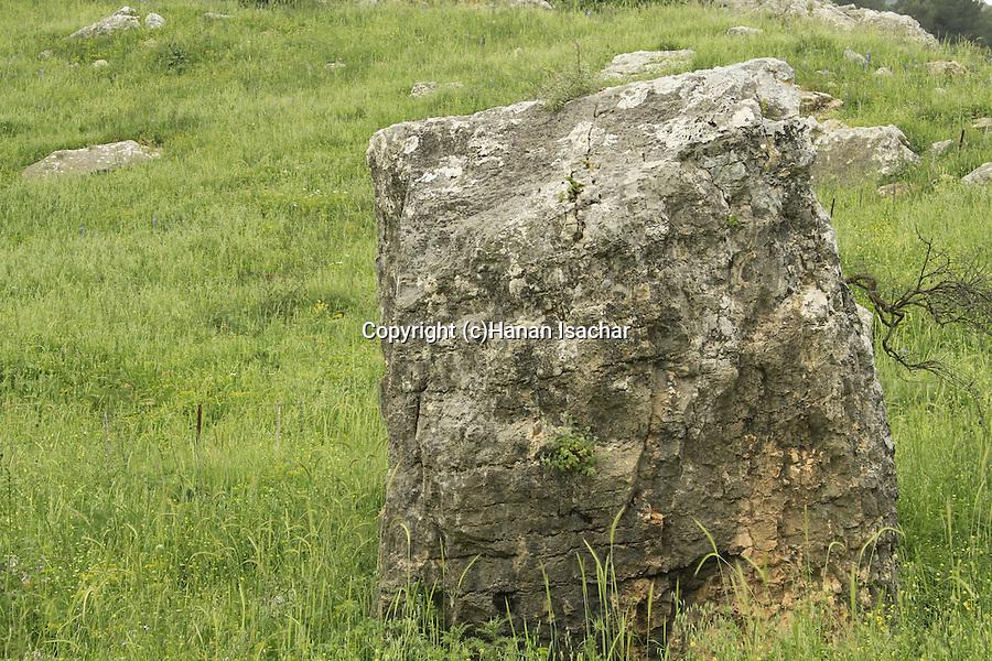 Israel, Upper Galilee, rocks in Naftali Mountains forest