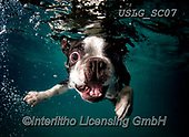 REALISTIC ANIMALS, REALISTISCHE TIERE, ANIMALES REALISTICOS, dogs, paintings+++++SethC_320B2636rev,USLGSC07,#A#, EVERYDAY ,underwater dogs,photos,fotos ,Seth