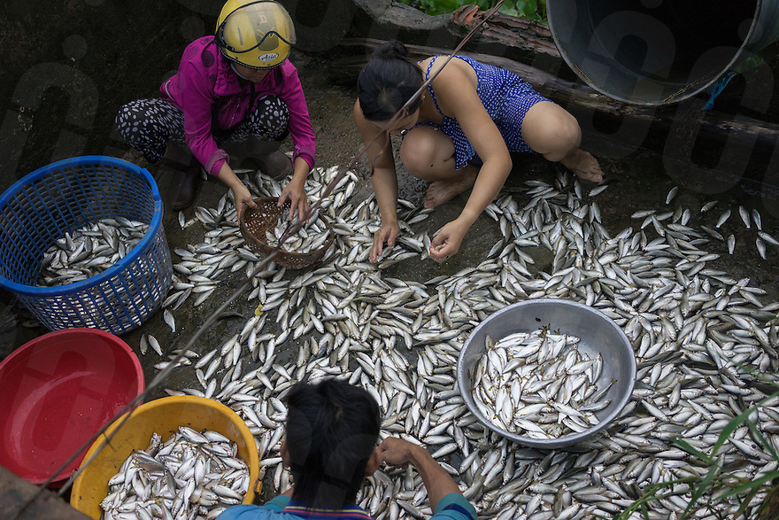October 16, 2014 - Tram Chim (Vietnam). Villagers clean and pick fishes to sell to the local market. © Thomas Cristofoletti / Ruom