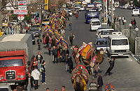 Selcuk, Turkey, 20/01/01..The traditional sport of camel wrestling is popular throughout western Turkey in the winter months; the largest event is the annual festival held in Selcuk on the third weekend of January. The day before the contest camels are paraded through the town and carpets to be given as prizes are hung on display.