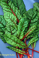 HS80-002z  Ruby Red or Rhubarb Swiss Chard