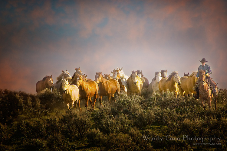 Wrangler escorting small herd of horses back to the ranch at sunset, northwest Colorado