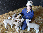 Amy Gallagher feeding the new born lambs at Newgrange Farm. Photo:Colin Bell/pressphotos.ie
