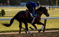 ELMONT, NY - JUNE 08: Blended Citizen gallops arounds the track as horses prepare on Friday for the 150th running of the Belmont Stakes at Belmont Park on June 8, 2018 in Elmont, New York. (Photo by Scott Serio/Eclipse Sportswire/Getty Images)