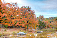 Maples along the Sabinal River in the Texas Hill Country turn a brilliant orange and red each November.
