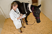 Mississippi State University, College of Veterinary Medicine, Assistant Professor, Jacquelyn Bowser with equine patient.